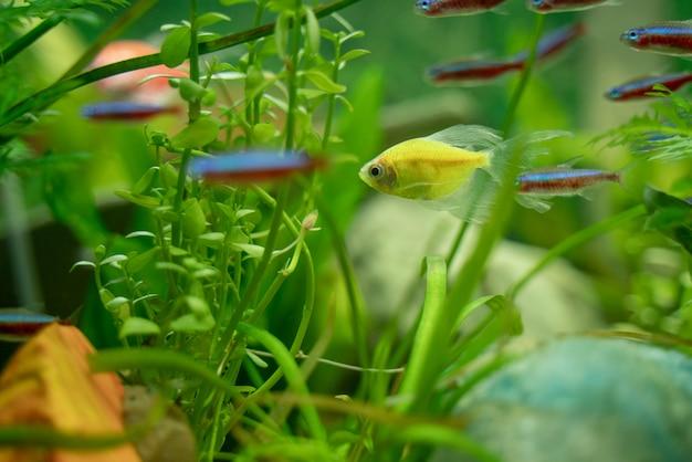 Pesci multicolori in un acquario Foto Premium