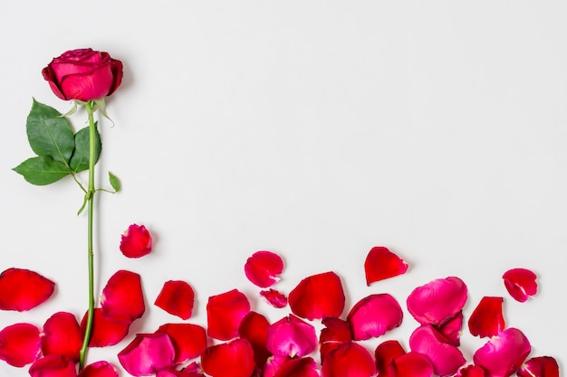 Petali di rosa adorabili con lo spazio della copia sulla disposizione piana Foto Gratuite