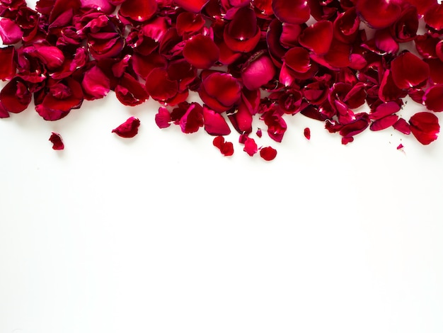 Petali di rosa rossa romantici su fondo bianco Foto Premium