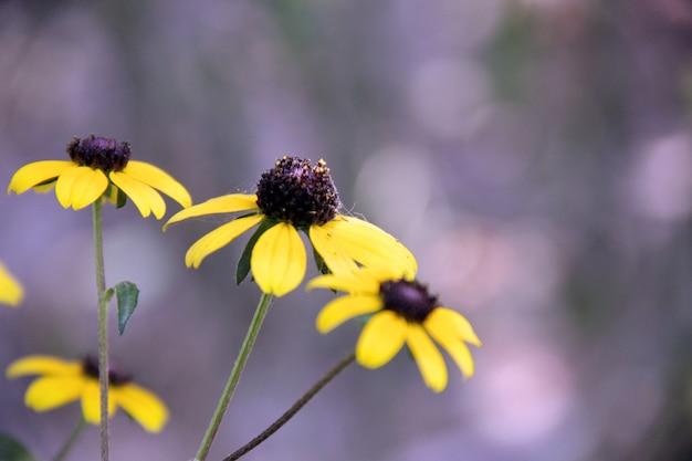 Petali pianta fiori bellezza la stagione Foto Gratuite