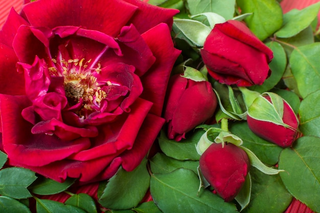Petalo di rosa rossa artistico del primo piano Foto Gratuite