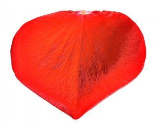 petalo-di-rosa-san-valentino_19-119092.j