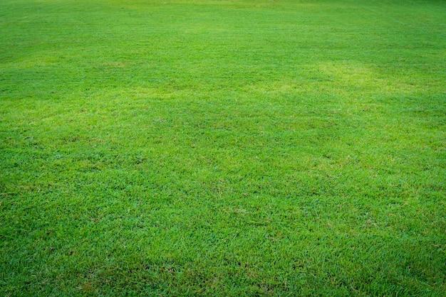 Pezzo di tappeto erboso Foto Gratuite