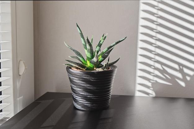 Pianta da interno su vaso nero Foto Premium