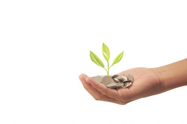 Pianta da soldi che cresce dalle monete in mano Foto Premium