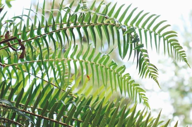 Pianta dalle foglie verdi Foto Gratuite