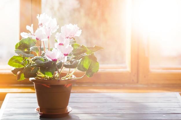 Pianta e giardino still life Foto Gratuite