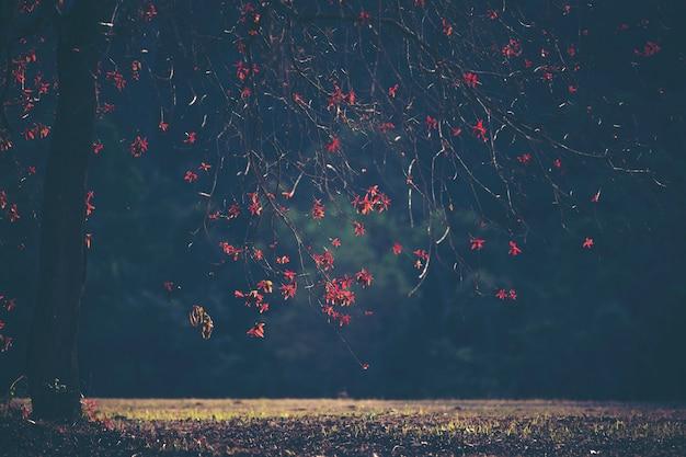 Pianta rossa, fiore e foglia, paesaggio forestale Foto Premium