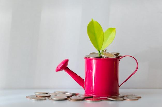Pianta sulle monete del mucchio in annaffiatoio usando come concetto finanziario di investimento di crescita e di affari Foto Premium