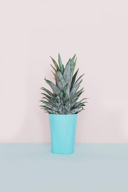 Pianta tropicale moderna della decorazione domestica. cactus su sfondo blu rosa. minimalismo disteso. Foto Premium