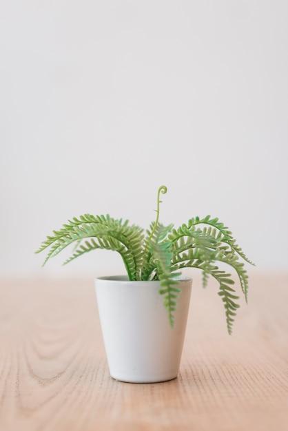 Pianta verde in vaso da fiori bianco Foto Gratuite