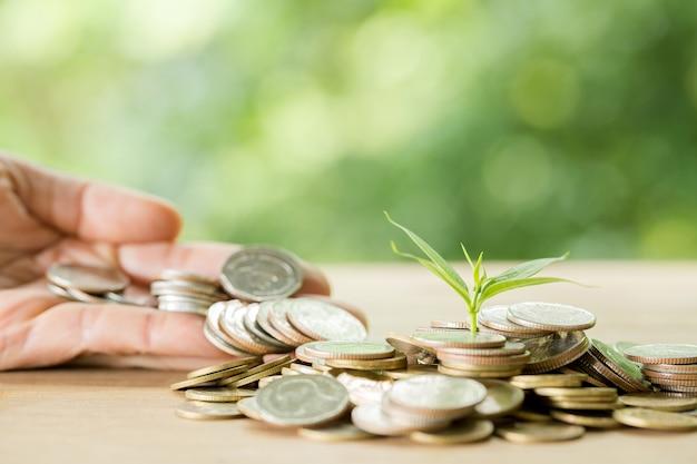 Piantare alberi su un mucchio di monete con la luce solare Foto Gratuite
