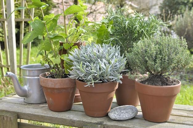 Piante aromatiche in vaso in giardino Foto Premium