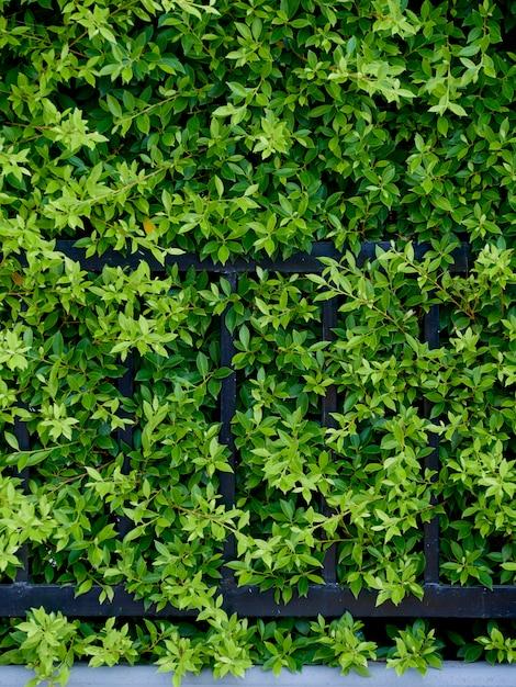 Piante da giardino per muro Foto Premium