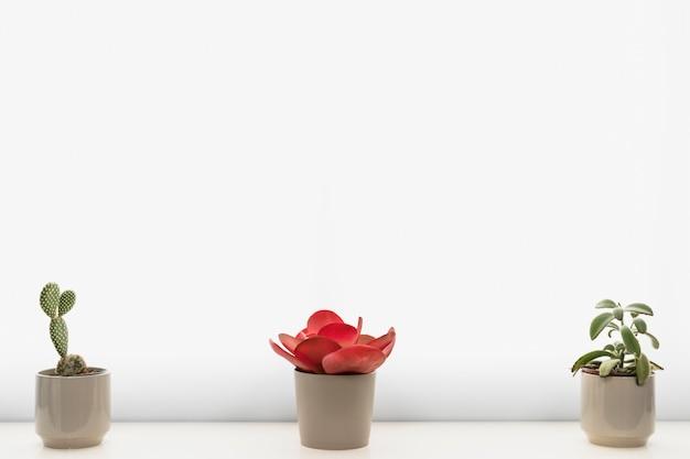 Piante da ufficio in vasi da fiori Foto Gratuite