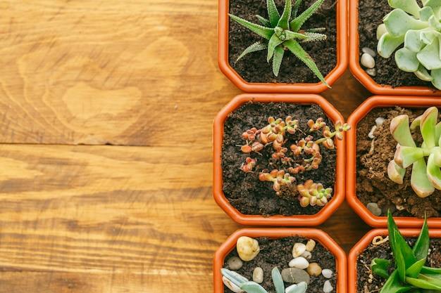 Piante domestiche a fiore succulente. Foto Premium