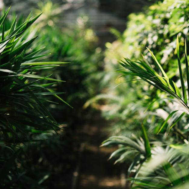 Piante fresche che crescono in serra Foto Gratuite