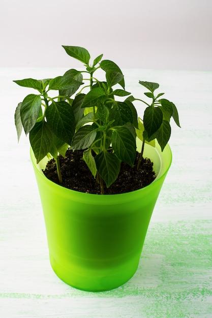 Piante giovani in vaso, verticale Foto Premium