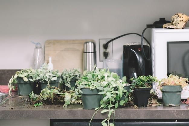 Piante sul tavolo della cucina | Scaricare foto gratis