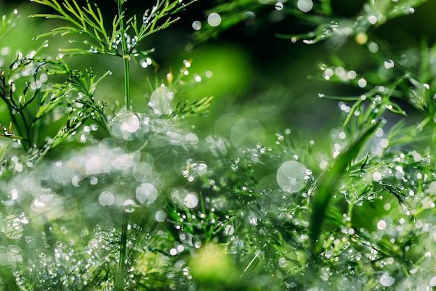 Piante verdi floreali astratte (defocused, vago) con bello bokeh, rugiada su erba Foto Premium