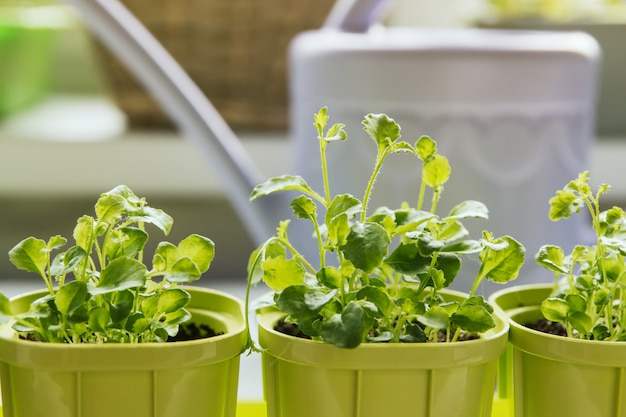 Piantine di fiori in vasi di plastica verde Foto Premium