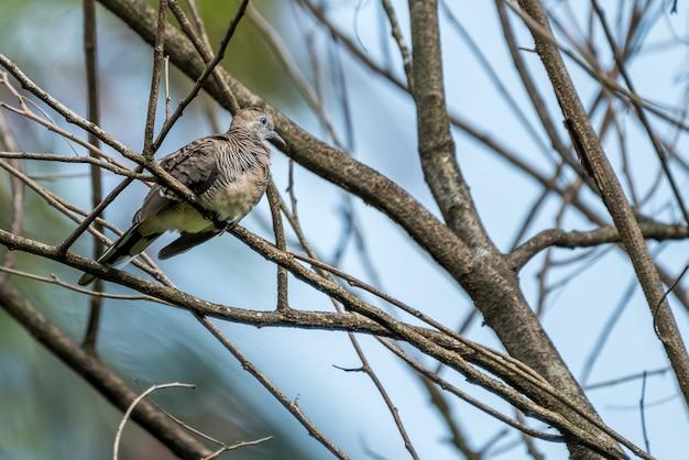 Piccione-uccello appollaiato sul ramo Foto Premium