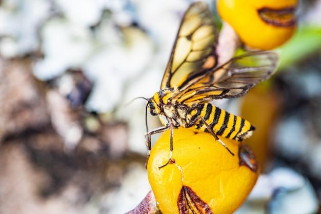 Piccola ape sul fiore giallo dell'orchidea selvatica Foto Premium