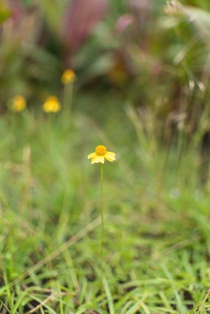 Piccola floricultura in giardino Foto Gratuite