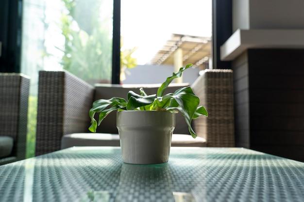Piccola pianta in una tazza di ceramica per la decorazione. Foto Premium