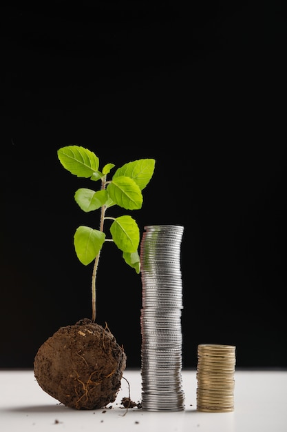 Piccola pila di alberi e monete su sfondo scuro Foto Premium