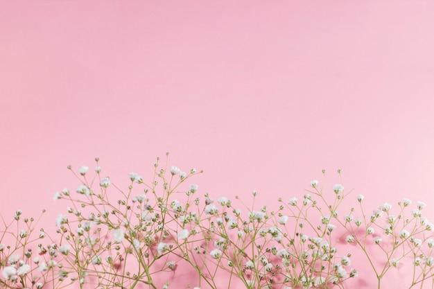 Piccoli fiori bianchi in fiore su sfondo rosa scaricare for Fiori piccoli bianchi