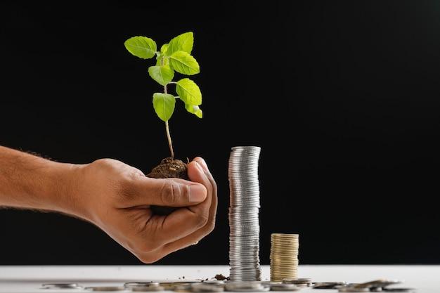 Piccolo albero e pila di monete indiane Foto Premium