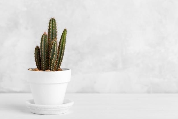 Piccolo cactus decorativo Foto Premium