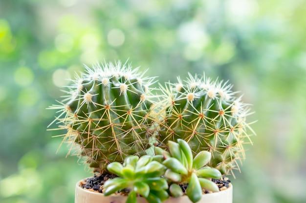 Piccolo cactus di forma del cuore in vaso di fiori con il fondo verde del bokeh dell'albero Foto Premium