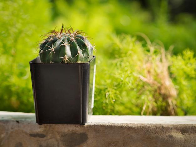 Piccolo Giardino Sul Balcone : Piccolo cactus o succulenta in una pentola sul balcone con giardino