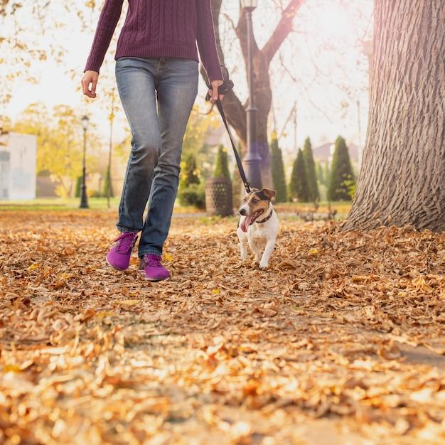 Piccolo cane adorabile che cammina nel parco Foto Gratuite
