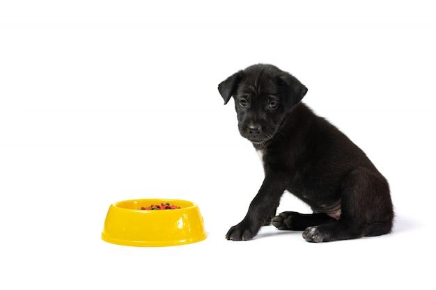 Piccolo cane sveglio con la ciotola di cibo per cani isolata su fondo bianco Foto Premium
