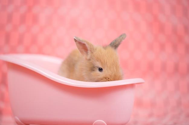 Vasca Da Bagno Rosa : Piccolo coniglio bambino marrone nella vasca da bagno rosa