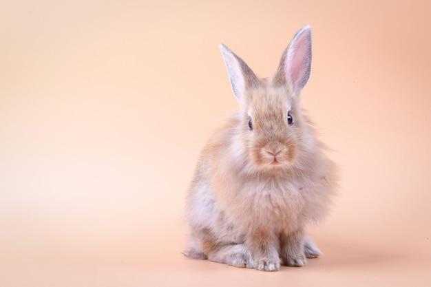 Piccolo coniglio sveglio che sta su un fondo arancio Foto Premium