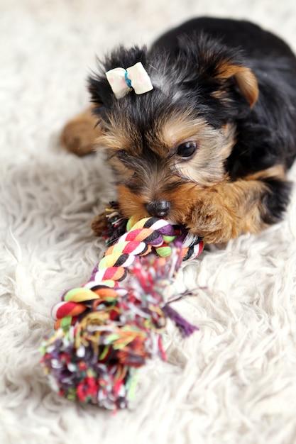 Piccolo cucciolo carino a casa Foto Gratuite