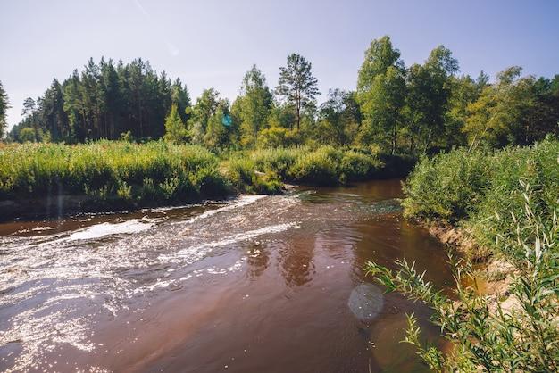 Piccolo fiume in foresta nel giorno soleggiato Foto Premium
