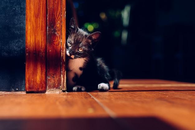 Piccolo gattino, animale domestico, semplicemente seduto per terra. Foto Premium