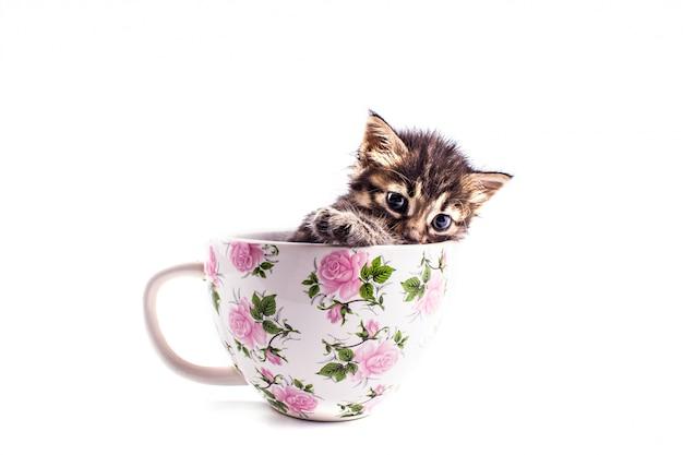 Piccolo gattino del tabby in una grande tazza bianca Foto Premium