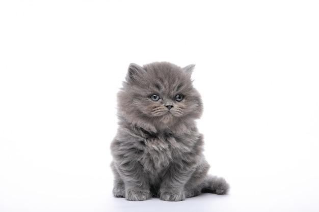 Piccolo gattino nero che si siede su un bianco isolato Foto Premium