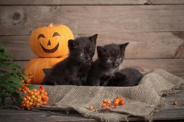 Piccolo gatto nero con zucche di halloween Foto Premium