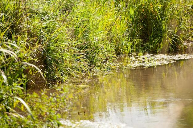 Piccolo ruscello selvaggio con la sua vegetazione libera e verde Foto Premium