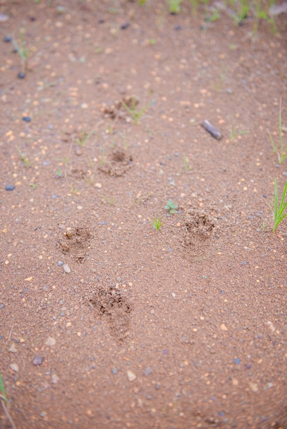 Piede animale a terra Foto Premium