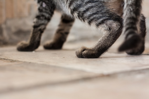 Piede di gatto sulle piastrelle del pavimento con lo spazio della