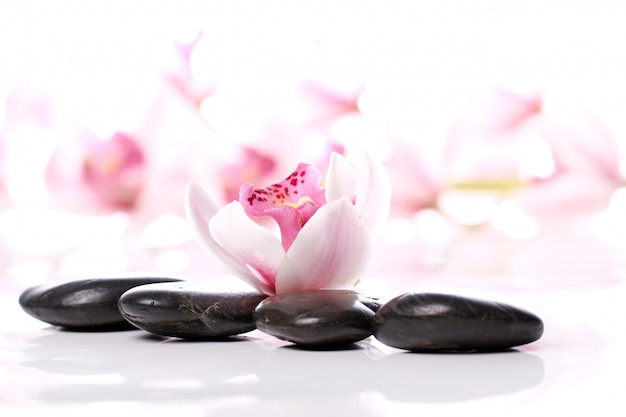 Pietre della stazione termale e bella orchidea Foto Gratuite