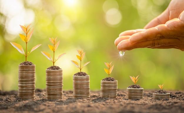 Pila di monete con giovane germoglio verde in cima. successo aziendale, concetto finanziario o crescente di denaro Foto Premium